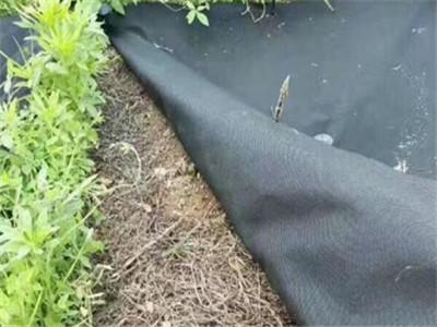 生态防草布报价-透气透水防草布价格-透气透水防草布批发
