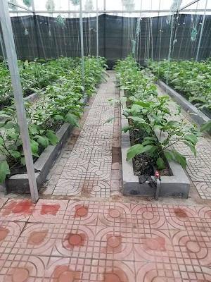 无土栽培——无土栽培技术