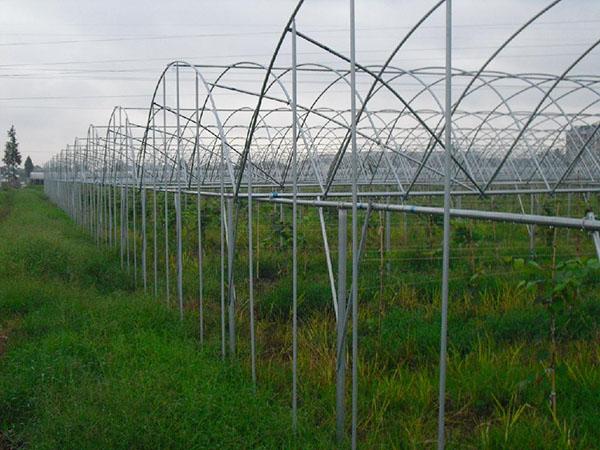 玻璃温室骨架 连栋骨架大棚安装 山东口碑好的温室大棚公司