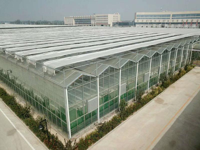 文絡型玻璃溫室-冬暖日光拱棚多少錢-冬暖日光拱棚公司