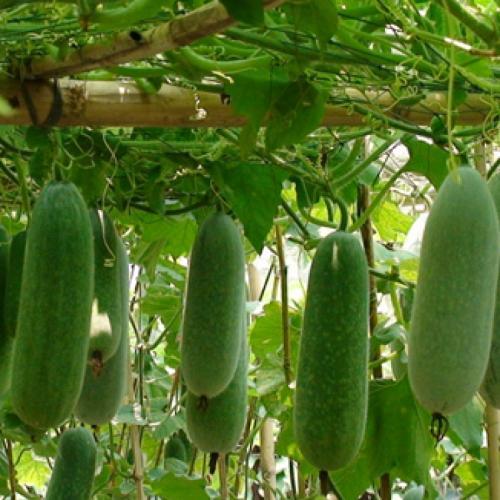 厦门合格的蔬菜配送,漳州蔬菜配送