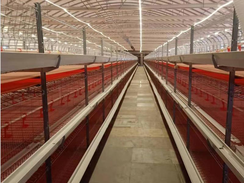 网养鸡笼厂_鑫汇源温控质量良好的养殖设备