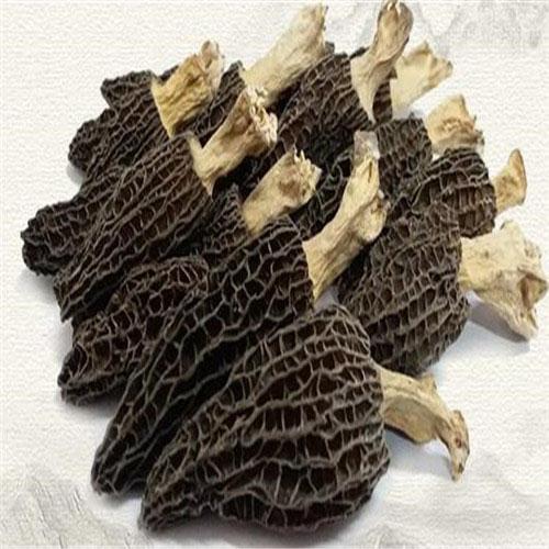 羊肚菌价格-山东羊肚菌基地-山东羊肚菌供货商