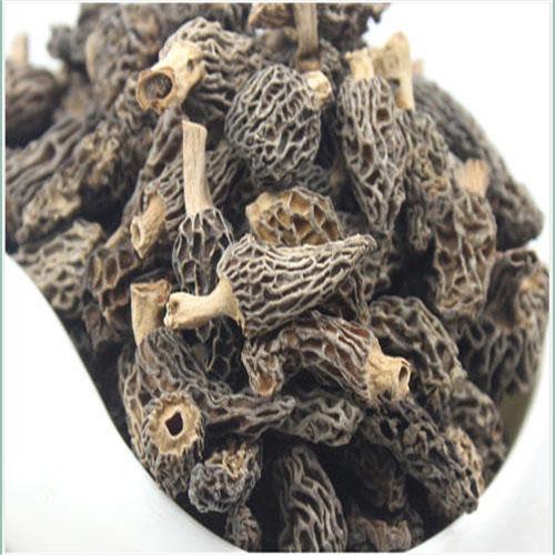 羊肚菌基地-山东羊肚菌-羊肚菜菌种