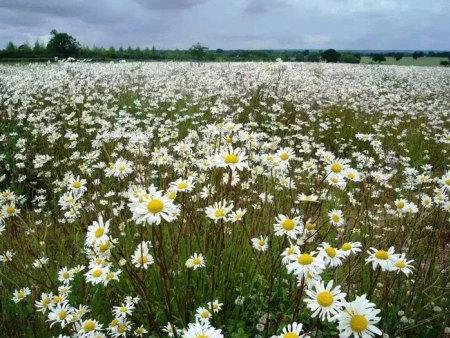 浙江花海景觀工程-想買合格的花海景觀工程-就到澤坤花卉
