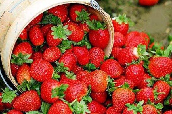防城港新鮮草莓批發_南寧草莓批發