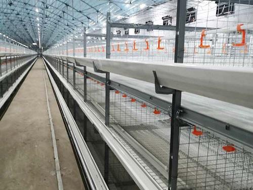 家禽养殖设备价格-自动化笼养设备厂家-自动化笼养设备价格