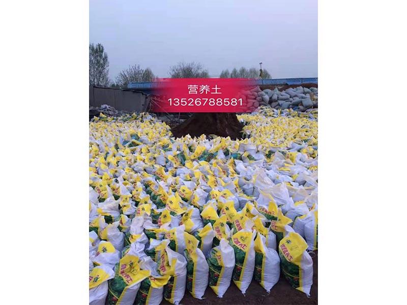 营养土草炭土厂家 物美价廉 产品好 质量优