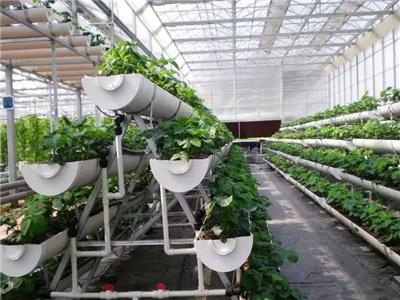 水培蔬菜技术造价-荷兰种植模式造价-荷兰种植模式价格