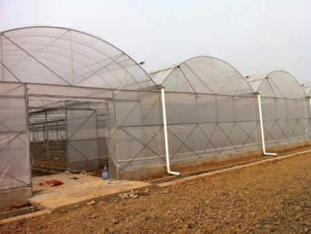 連棟溫室設計-農業大棚設計-農業大棚定制