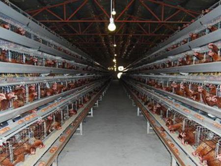 养鸭笼批发商-H型鸡笼价格-H型鸡笼厂家