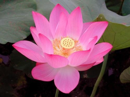 水生植物哪家好,水生植物种植基地,水生植物基地