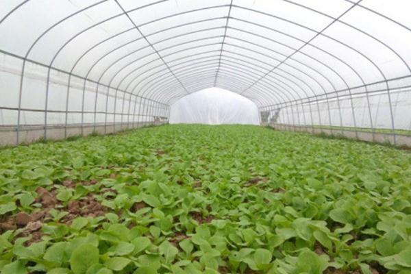蔬菜大棚||蔬菜温室大棚
