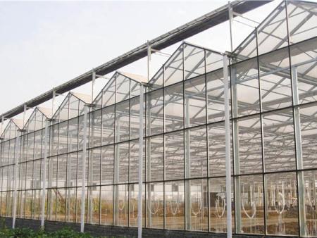 德州蔬菜玻璃大棚建造