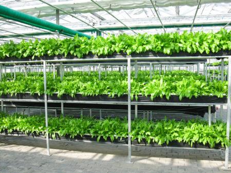 临沂简易蔬菜大棚建造