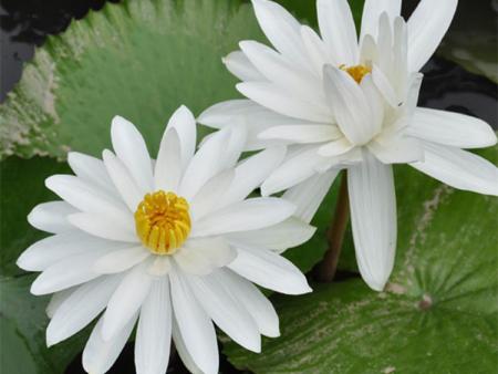 绿化用水生植物,绿化用水生植物基地,绿化用水生植物价格