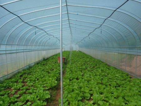 高温蔬菜大棚价格,高温蔬菜大棚承建,高温蔬菜大棚