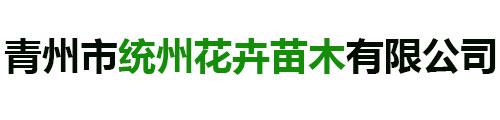 青州市统州花卉苗木有限公司