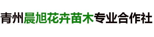 青州晨旭花卉苗木专业合作社