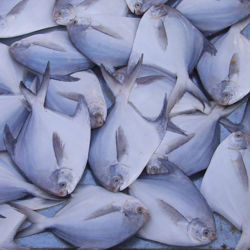 莲湖海鲜冻品一手货源-海鲜冻货一手货源-海鲜冻货哪里进货