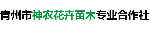 青州市神农花卉苗木专业合作社