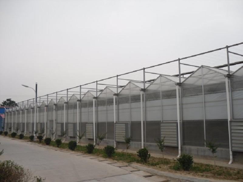 新疆玻璃溫室工程建設