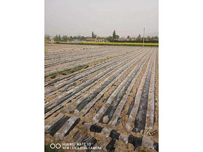 新疆透明地膜生产厂家|兰州金金辉农资提供划算〓的农用地膜