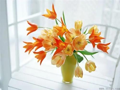 西安鲜花外卖-花艺师培训-西安网上订花送花