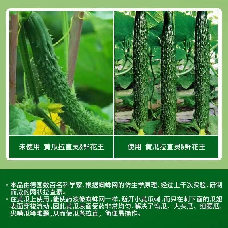 黃瓜順直藥銷售-絲瓜鮮花哪家好-黃瓜花打頂代理