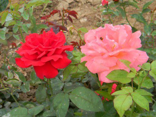 山东时令草花,山东哪里供应的时令草花种植基地价格优惠