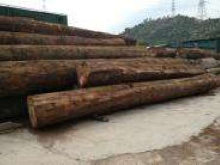 雜木|進口供貨商-雜木